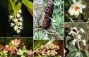 Tận mục những loài đặc hữu có 1-0-2 ở vườn quốc gia Vũ Quang