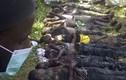 Khủng bố ở Nigeria, 47 sinh viên thiệt mạng