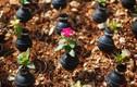 Ngắm hoa nở trên lựu đạn hơi cay ở Bờ Tây