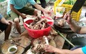 Lai Châu: 42 người nhập viện vì ăn thịt trâu