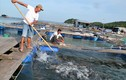 """Kiên Giang: Làng biển đổi đời nhờ nuôi loài """"cá bạc tỷ"""""""