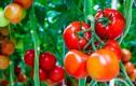 5 thực phẩm giảm mỡ bụng tốt nhất trong ngày hè
