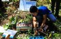 Khoan lỗ 20 cm rồi đổ thuốc diệt cỏ hạ độc 3.500 cây thông ở Lâm Đồng