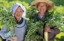 Bí quyết sống 100 tuổi của người dân ngôi làng trường thọ ở Nhật