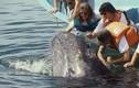 Video: Cá voi khổng lồ bơi sát thuyền, du khách thoải mái vuốt ve