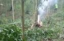Bộ Quốc phòng thông tin vụ rơi máy bay quân sự tại Nghệ An