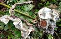 Cận cảnh các mảnh vỡ máy bay quân sự rơi tại Nghệ An