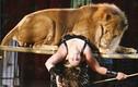 Video: Sư tử xé toạc hàng rào sân khấu, lao ra vồ bé 4 tuổi