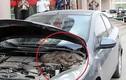 Video: Mở nắp ca pô phát hiện trăn khổng lồ quấn quanh động cơ ô tô