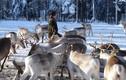 Video: Theo chân bộ tộc du mục chăn tuần lộc cuối cùng trên thế giới