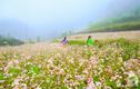 Video: Mãn nhãn cánh đồng tam giác mạch đẹp nhất Thủ đô