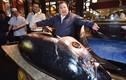 Video: Vì sao chủ cửa hàng sushi bỏ 3,1 triệu USD mua một con cá ngừ?