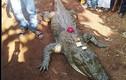Video: Cá sấu 130 tuổi chết, cả làng bỏ ăn, khóc ròng