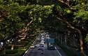 """Video: Khám phá quy trình """"nói hộ cho cây"""" ở Singapore"""