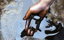 Những scandal gây rúng động về dầu ăn từ nước cống