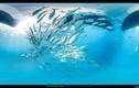 """Hé lộ """"thủy cung"""" đẹp mê người của các loài vật biển"""