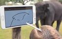 Kinh ngạc khả năng hi-tech siêu đỉnh của động vật