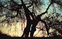 Điểm danh những thân cây quái đản nhất hành tinh (8)