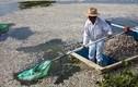 Cảnh kinh hoàng: 50 tấn cá chết thối trên hồ Mexico