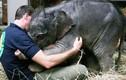 Những phát hiện không tin nổi về loài voi (2)
