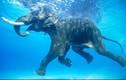 Những phát hiện không tin nổi về loài voi (1)