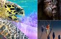Rùa ăn thịt sứa - ảnh thiên nhiên ấn tượng nhất