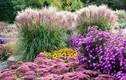 Lãng mạn và tuyệt mỹ - hoa mùa thu khắp thế giới