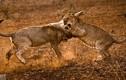 Những tuyệt tác ảnh về sinh tồn của dã thú châu Phi