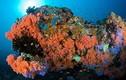 Những điều huyền bí đáng kinh ngạc trong lòng đại dương