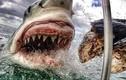 """Mê chụp ảnh, cô gái """"phơi thân"""" trước hàm răng cá mập"""