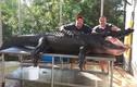Hai người đàn ông bắt cá sấu khổng lồ bằng tay không