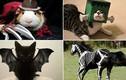 Bật cười với ảnh động vật trong tạo hình Halloween