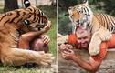Khiếp đảm xem người đàn ông ăn ngủ với hổ dữ mỗi ngày