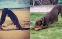Tư thế yoga độc nhất vô nhị của động vật