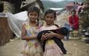 Xúc động cảnh động vật sống sót sau động đất Nepal (1)