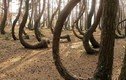 Bí ẩn rừng thông trăm tuổi bị uốn cong tại Ba Lan