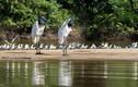 Kỳ thú động vật ở vùng đất ngập nước nhất thế giới