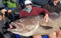 """Cụ bà """"tóm"""" được cá """"quái vật"""", nặng tới 60kg"""