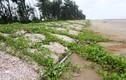 Kỳ thú loài ốc tạo thành con đường bằng ốc viết dài nhất Việt Nam