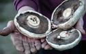 Loài nấm đặc biệt tiêu diệt được rác thải nhựa