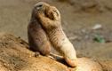 """Giải bí ẩn những động vật có ngôn ngữ """"cao cấp"""" hơn cả người"""