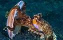 Chân dung động vật thiên tài của đại dương, có IQ đáng nể