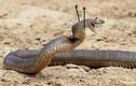 """Ảnh rắn hài hước khiến người sợ rắn cũng phải """"lăn ra cười"""""""