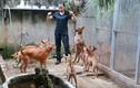 Điều bất ngờ ở trang trại chó Phú Quốc tiền tỷ
