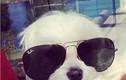 """Phát """"hờn"""" chó nhà sống như đại gia, đi siêu xe, xài hàng hiệu..."""