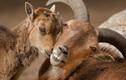 Phát ghen khoảnh khắc thân mật độc đáo của động vật