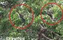 Sửng sốt phát hiện đàn chim cổ rắn quý hiếm tại Đồng Nai