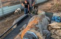 Bắt được cá sấu khổng lồ hơn 5m, siêu hung dữ