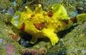 """Những loài sinh vật kỳ lạ, có """"một không hai"""" dưới đáy đại dương"""