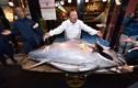 """Con cá """"khủng"""", mổ ra đem bán được hơn 41 tỷ đồng"""